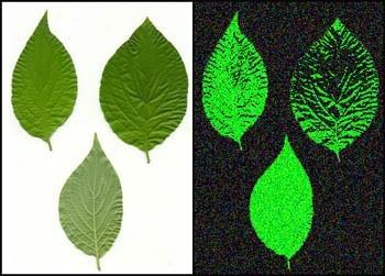 groene-bladen-test-uv-licht-aquapurica-waterfilter-water-watervitalisatie-water-zuiveren-drinkwater-filteren-filter-filtratie-waterfiltratie-waterbehandeling-omgekeerde
